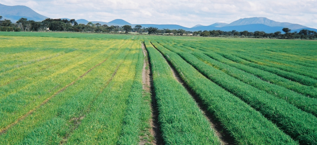 Crops on bed in waterlogged area