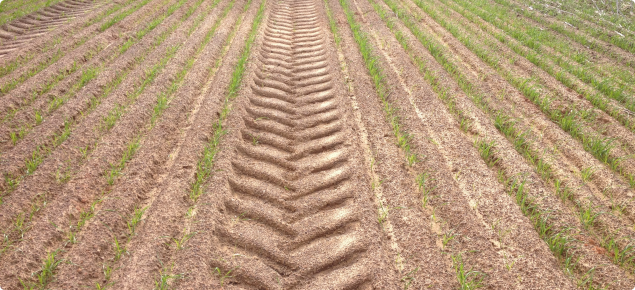 Surface soil compaction of cultivated gravelly clay
