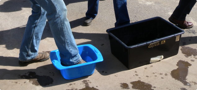 Orchard visitors using footbath.