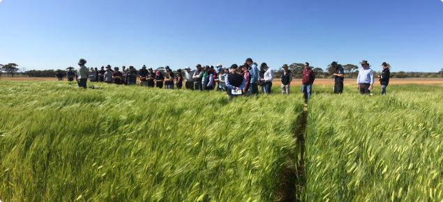 Blakely Paynter speaking at the Merredin Research Station Field Day