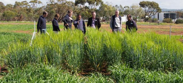 Barley trial