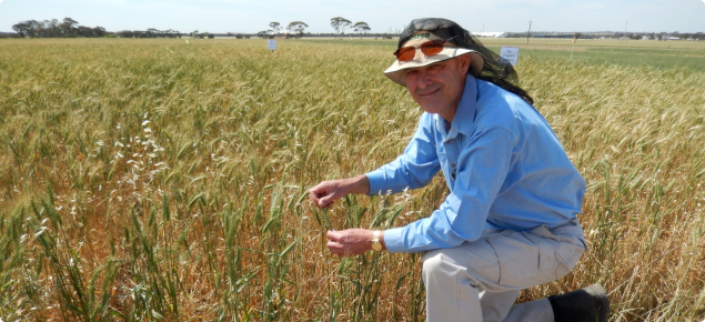 An image of Bob French, DAFWA researcher standing in a paddock in Merredin