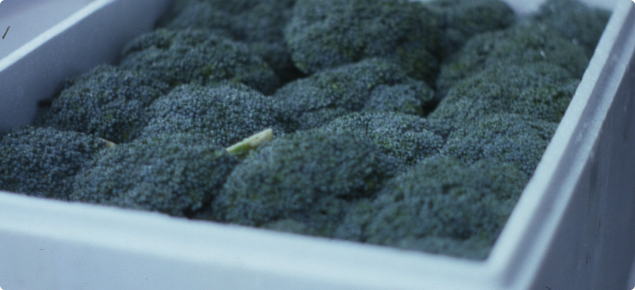 Broccoli packed in a polystyrene box