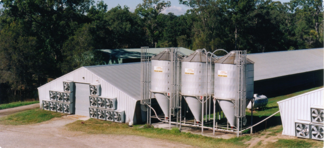 Poultry shed and feed bins