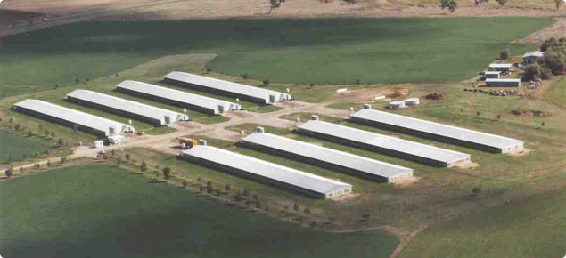 Poultry sheds aerial view