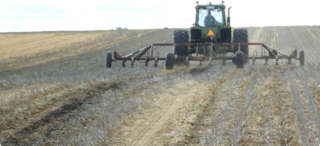 deep ripping yellow sand from long term permanent tramlines near Binnu