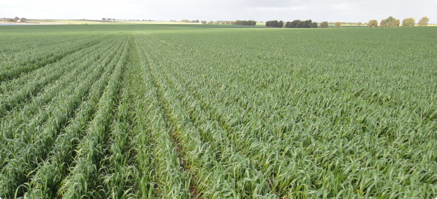 healthy soil and crop growth from deep ripping between permanent tramlines
