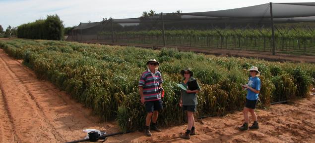Oat breeding team standing in front of a trial plot at the Carnarvon disease screening nursery in 2013