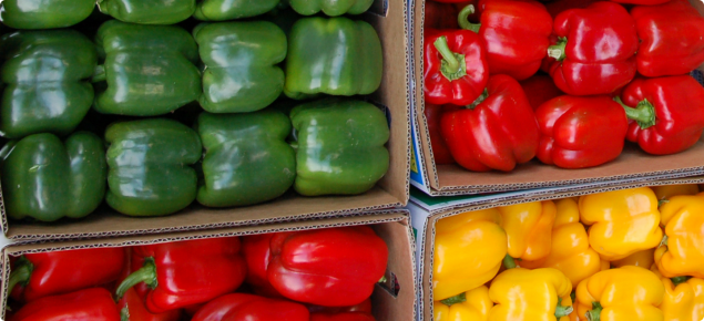 Red, green and yellow capsicums
