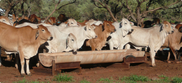 The Northern Beef forum and field day are open to all pastoralists, members of the beef supply chain and other interested people.