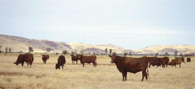 Cattle standing in pastoral area