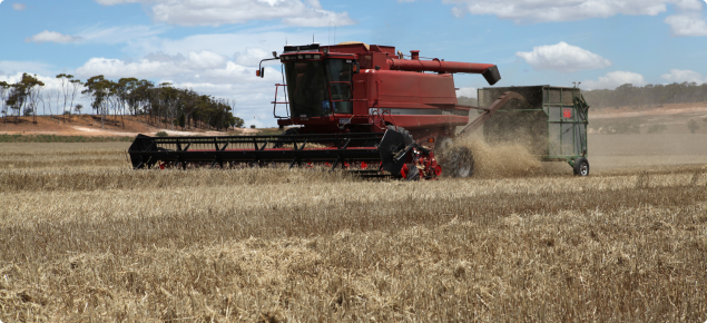 Harvesting with a chaff cart at Tarin Rock