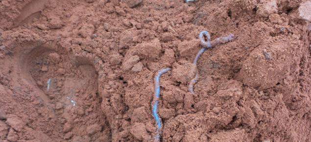 Earthworms in red loamy soil