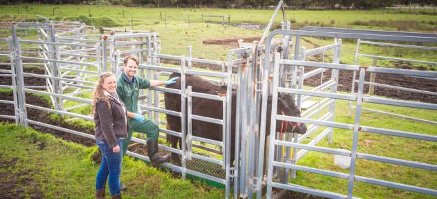 Cattle surveillance network champion Sheena Smith and DPIRD vet Andrew Larkins