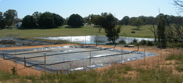 Photograph of covered effluent pond for collecting methane as part of manure management in a piggery