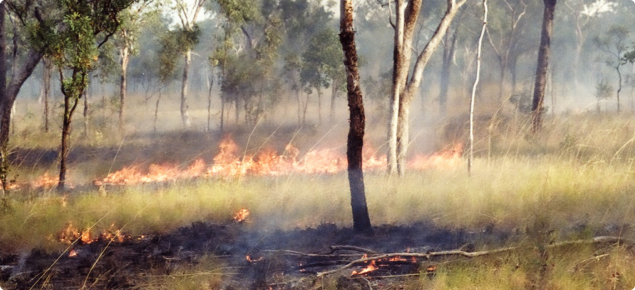 Curly spinifex fire