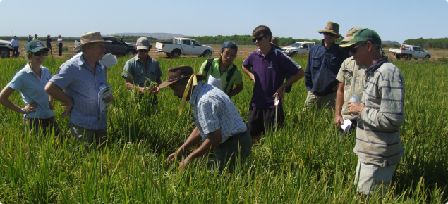 Rice trial at Frank Wise Institute