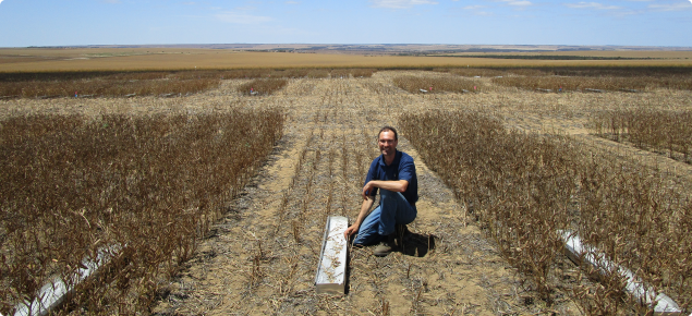 DPIRD researcher Martin Harries measuring yield loss after harvest