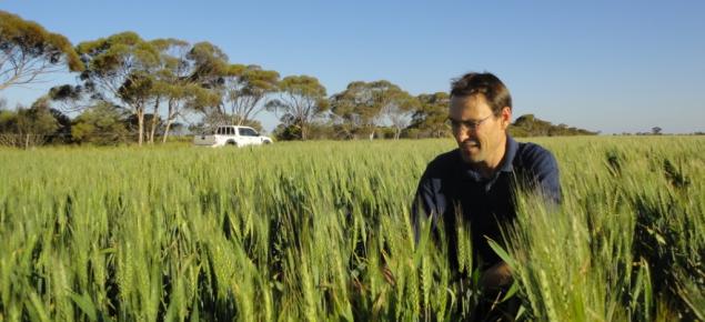 Martin Harries kneeling in a wheat crop