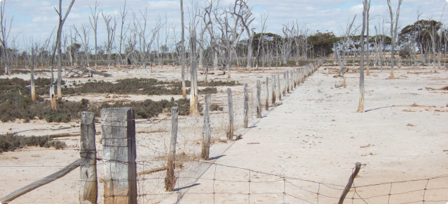 Photograph of salt affected valley floor showing dead trees and samphire colonisation