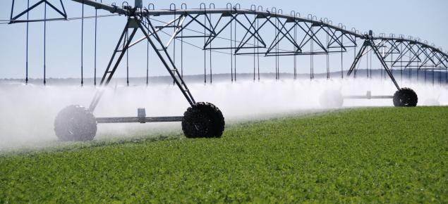 Centre-pivot irrigation of carrots