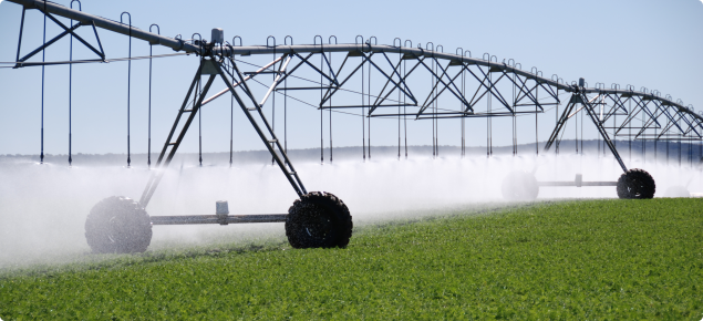 Centre pivot irrigation of carrots, Western Australia