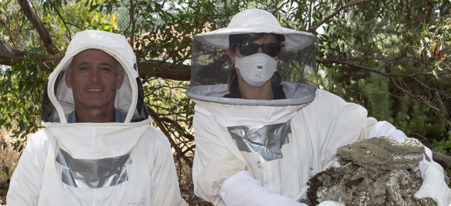 Two DPIRD staff following removal of a European wasp nest. One is holding a jar filled with wasps and the other is holding pieces of the removed nest.