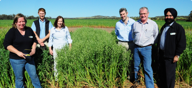 At the field trials fo the new oat variety Durack