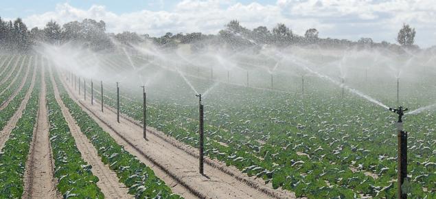 Irrigation at work