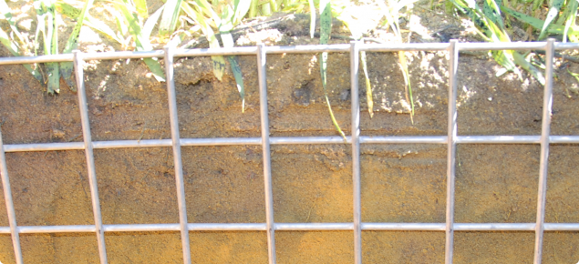 Duplex soil with a change in texture showing that the bulk of organic material is concentrated in the top 10-20cm