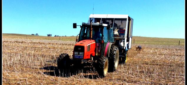 Tractor in paddock in Dandaragan
