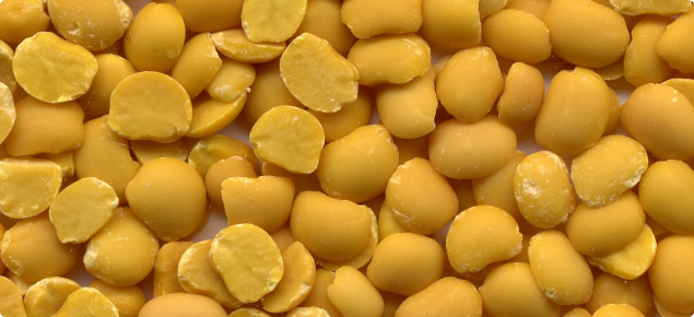 Close-up photograph of a lupin kernels. Lupin seeds have been de-hulled and split so the dried, yellow cotyledons of many seeds are shown.