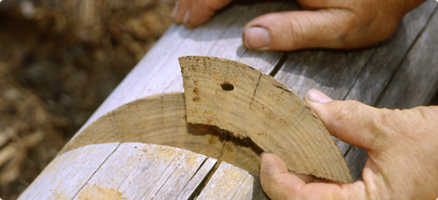 An oval-shaped EHB exit hole. The hole is 5-10mm in length and in-line with the grain.