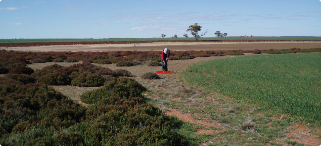 An operator is checking the salinity of soil using an EM38 machine which measures the electrical conductivity