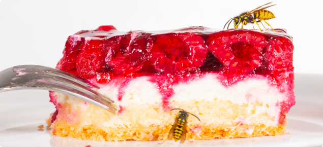 European wasps feeding on a raspberry cake