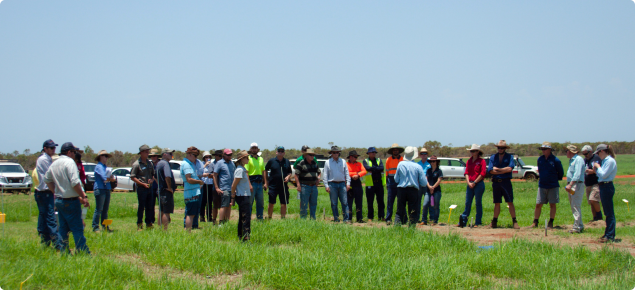 Field walk of pasture and fodders trials in Broome (November 2018)
