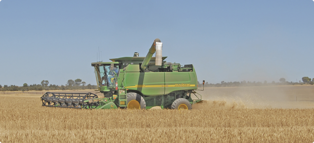 Combine harvester operating in a cereal crop