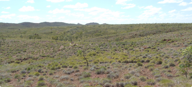 Hard spinifex plain pasture in the Dockrell land system