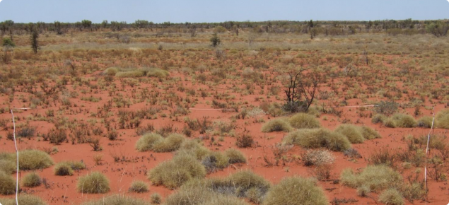 Hard spinifex, Uaroo land system