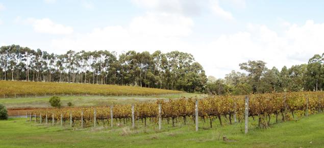 Vineyard view at Margaret River