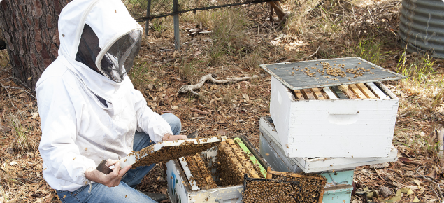 When working with bees it is important to be protected from stings