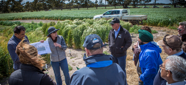 Brenda Shackley speaking at a wheat trial at DPIRDs Katanning research station