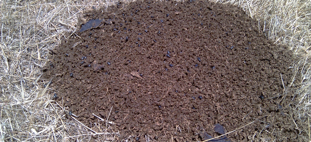 Shredded dung pad