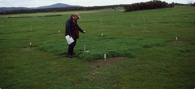 A low water soluble phosphorus fertiliser increasing clover growth