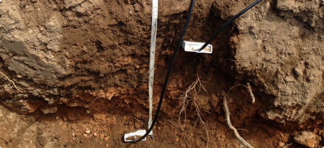 Water content soil moisture probes being installed into undisturbed soil in an apple orchard