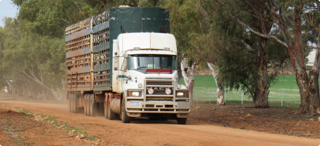 Semi trailer transport truck driving down a dirt road with 4 decks of sheep loaded on board.