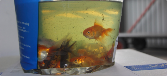 Live fish are considered a potential carrier of pest and disease organisms