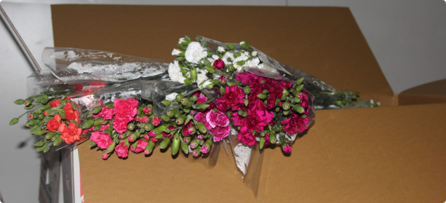 Cut flowers may carry insect pests or disease into Western Australia