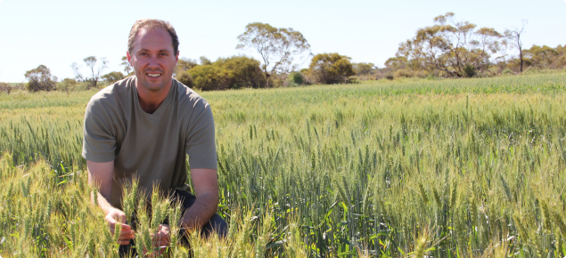Researcher Dion Nicol at the Merredin Research Station