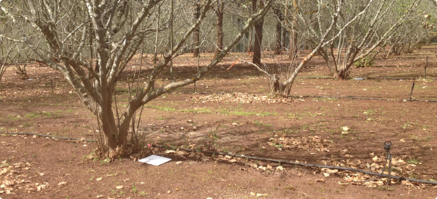 Tile monitoring in a truffle orchard